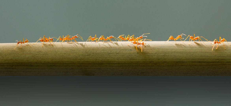 445-ants2 (Demo)